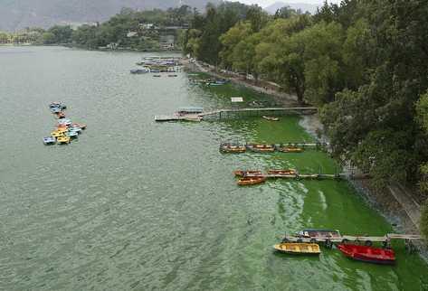 En la actualidad, las microalgas contaminan  el Lago de Amatitlán. Puede observarse como una mancha verde en las orillas de este cuerpo de agua.