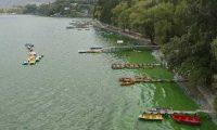 En la actualidad, las microalgas contaminan  el Lago de Amatitlán. (Foto Prensa Libre: Hemeroteca PL)