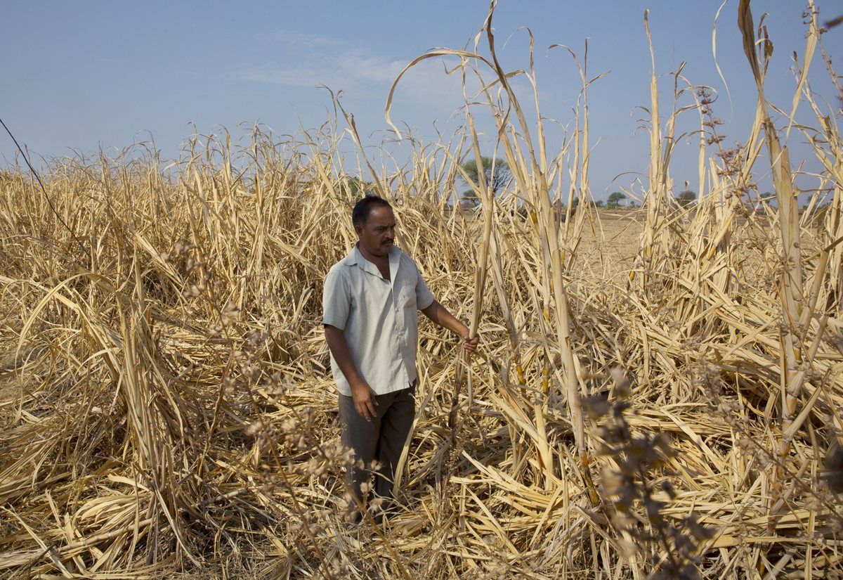 Entérese cómo se investigará los efectos del cambio climático en la agricultura