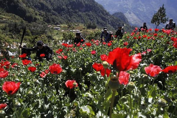 """Policías erradican en San Marcos un cultivo de amapola. (Foto Prensa Libre: Archivo)<br _mce_bogus=""""1""""/>"""