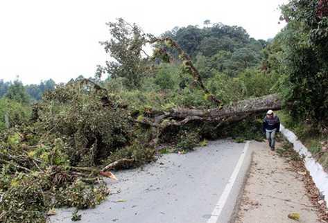 Árboles bloquean ruta a Mataquescuintla, Jalapa (Foto Prensa Libre: Hugo Oliva).