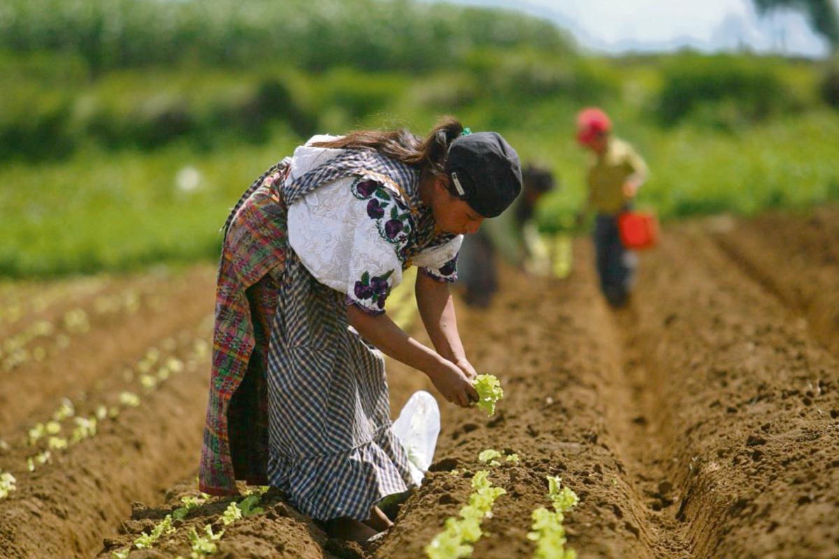 Estudio propone fomentar agricultura local