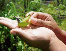 En el bosque nuboso se puede disfrutar de exhuberante flora y la  fauna. (Foto Prensa Libre: Carlos Grave)