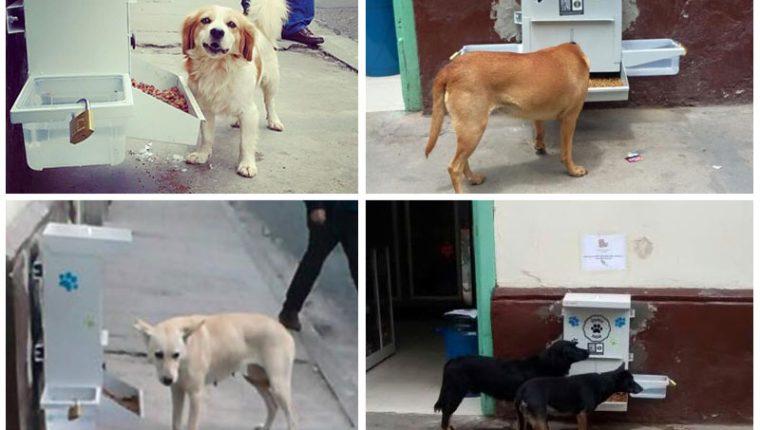 Comedores gratuitos para perros callejeros de Colombia – Prensa Libre
