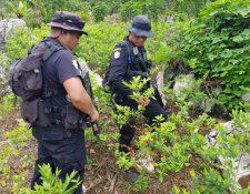 La Policía Nacional Civil trabajo por varias horas hasta encontrar la plantación de coca y laboratorio para procesarla. (Foto Prensa Libre: PNC)