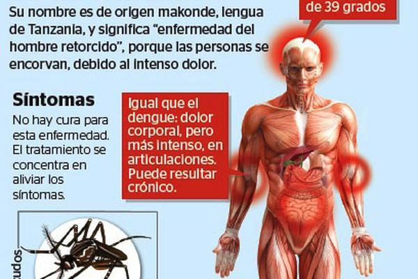 """Infografía sintomas del virus chikungunya.<br _mce_bogus=""""1""""/>"""