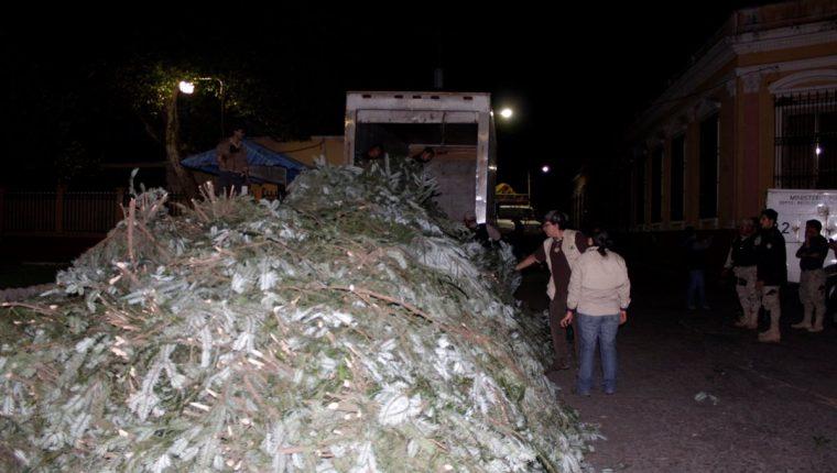 Agentes de Diprona contabilizan ramillas de pinabete incautadas en San Juan Ostuncalco, Quetzaltenango. (Foto Prensa Libre: María José Longo)