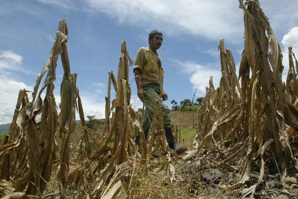 Para este año podría haber una disminución en el régimen de lluvia lo que afectaría más el corredor seco.