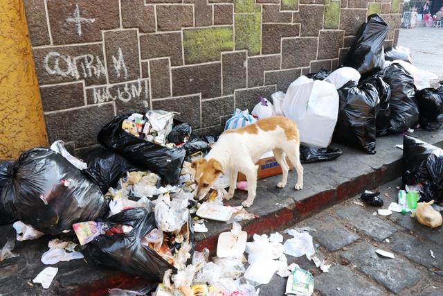 Los perros rompen las bolsas de basura que los vecinos dejan en las calles de Quetzaltenango y causan más suciedad. (Foto Prensa Libre: María José Longo)