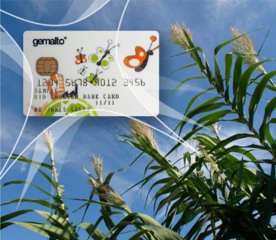 Crean tarjetas bancarias biodegradables hechas de maíz