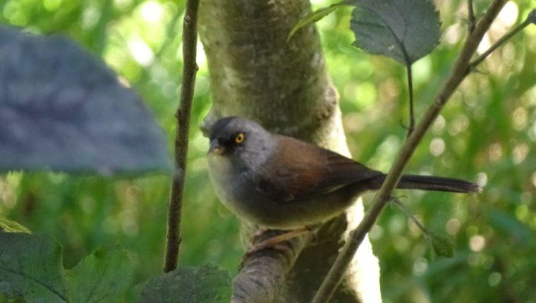 En los barrancos de la Ciudad de Guatemala habitan varias especies de aves. (Foto Prensa Libre: Cortesía Salvadora Morales)