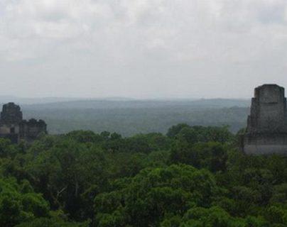 La ganadería y el narcotráfico amenazan la Biosfera Maya