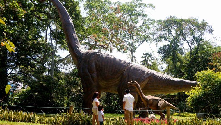 Un braquiosaurio de 15 metros de alto por 30 de largo es una de las últimas atracciones que introdujo Dino Park, en Santa Cruz Muluá, Retalhuleu. (Foto Prensa Libre: Rolando Miranda)