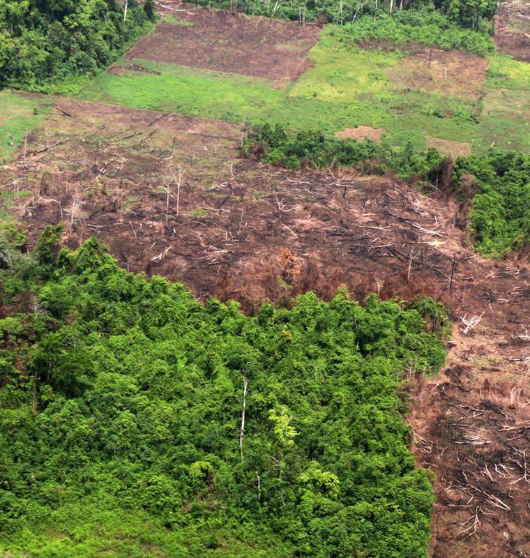 La tala es otro de los problemas que invasores han causado en el Parque Nacional Laguna Lachuá, en Alta Verapaz. (Foto Prensa Libre: Eduardo Sam).
