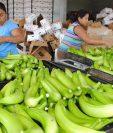 El 95 por ciento del banano que se produce en Guatemala es exportado a EE. UU. (Foto Prensa Libre: Hemeroteca PL).