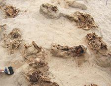 Fotografía cedida por la National Geographic de un grupo de restos óseos momificados de origen precolombino y hallados en el sitio arqueológico Huanchaquito, Perú.(Foto Prensa Libre:EFE).
