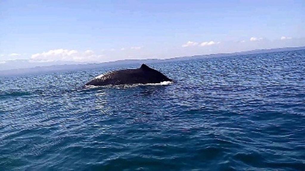 Avistamiento de ballena causa sensación