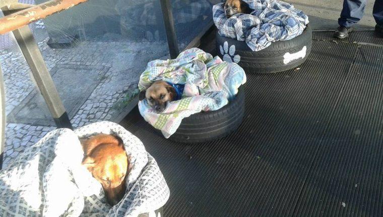 Tres perros sin hogar han sido resguardados por trabajadores de una estación de autobuses en Curitiba, Brasil. (Foto Prensa Libre: Facebook Fabiane Rosa)
