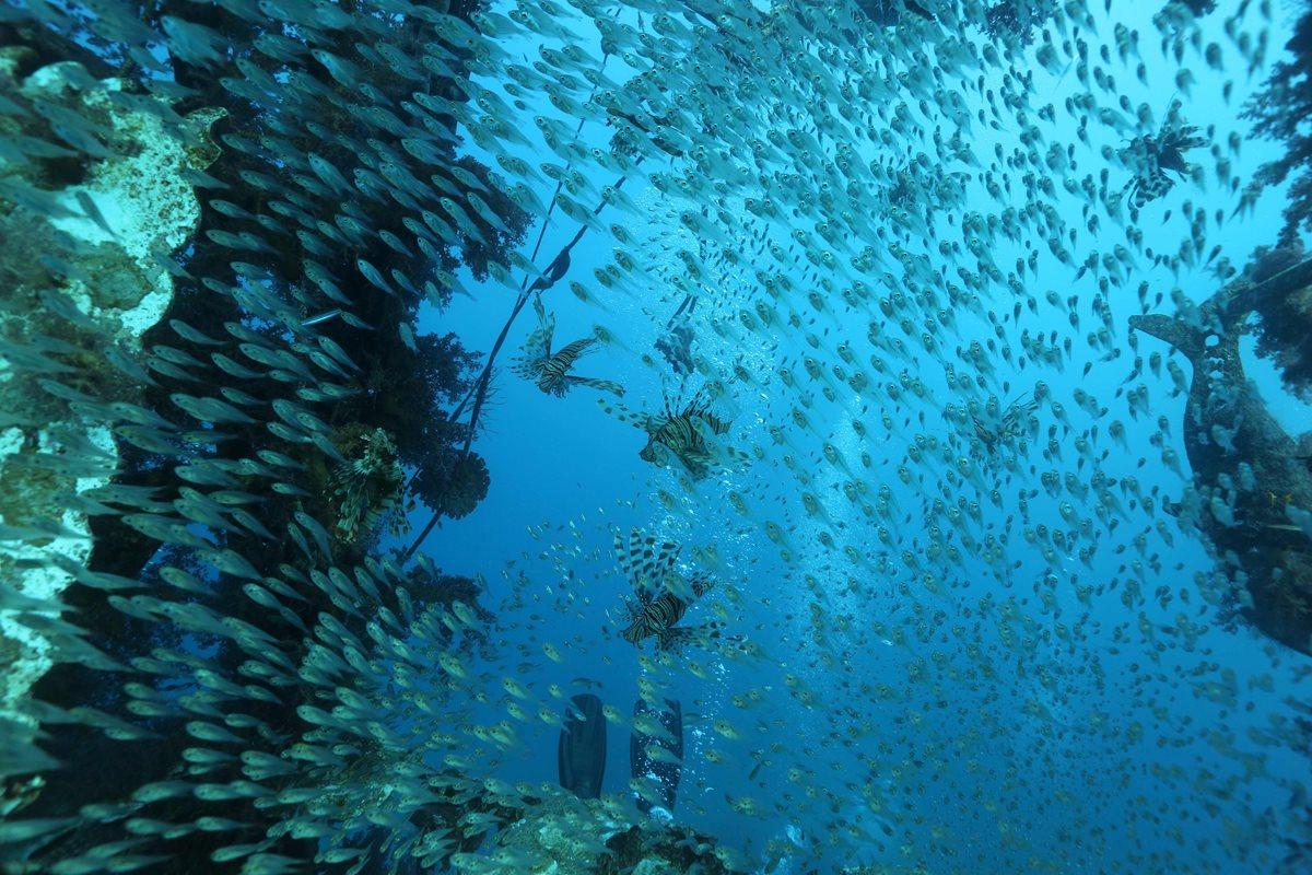 Descubren 44 nuevos virus de los más abundantes en todos los océanos