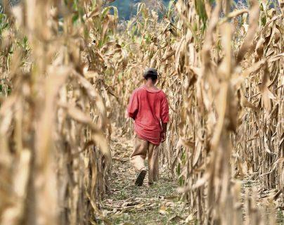 Posible merma de lluvias preocupa a agricultores