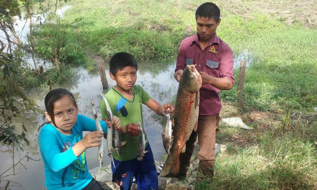 Pobladores reportan mortandad de peces en arroyo