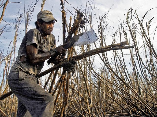 La temporada de zafra dura entre los meses de noviembre a mayo. Miles de personas se dedican al corte de caña. (Foto, Prensa Libre: Hemeroteca PL).