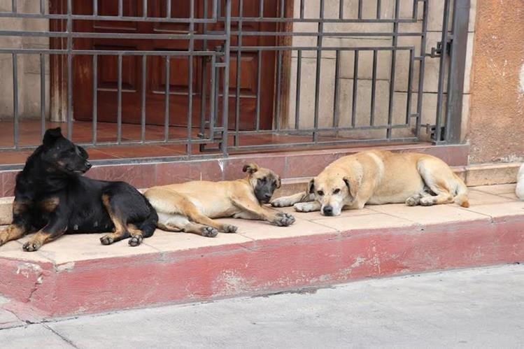Impulsan asistencia alimenticia para perros callejeros en la Ciudad de Guatemala