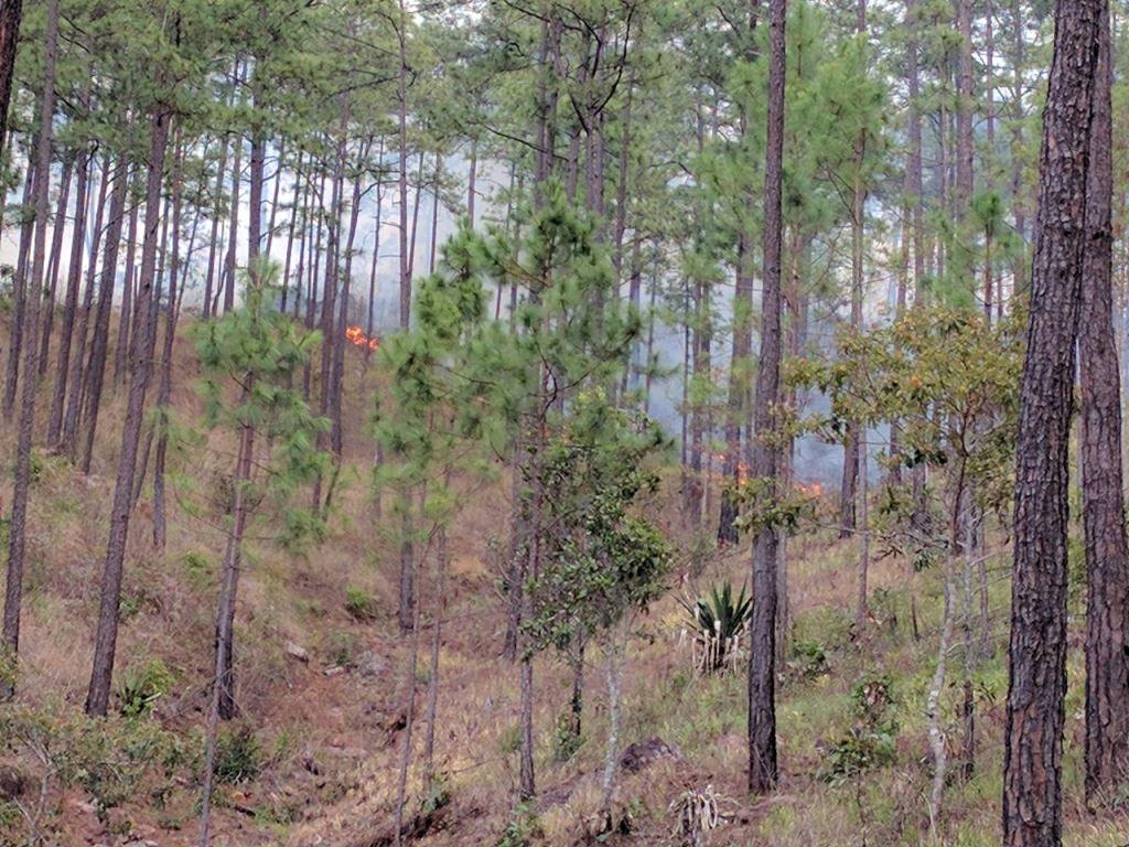 El fuego, que comenzó en una quema agrícola, no ha sido controlado por bomberos forestales de Sipecif. (Foto Prensa Libre: Mario Morales)