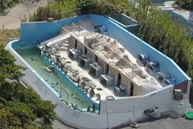 Organizaciones protectoras de los derechos de los animales buscan la liberación de Honey y otras especies que permanecen abandonadas en el parque Inubosaki Marine, en Japón.