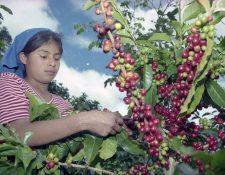 Residuos de café producen energía