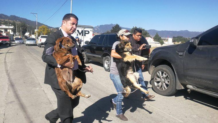 Autoridades rescatan a dos de los perros localizados en el inmueble en La Esperanza, Quetzaltenango. (Foto Prensa Libre: Fred Rivera)