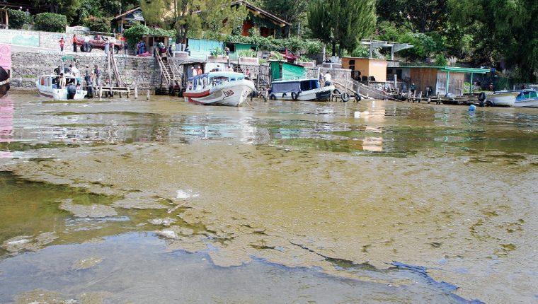 Desde el 2009 preocupa el aumento de la cianobacteria en el Lago de Atitlán (Foto: Hemeroteca PL)
