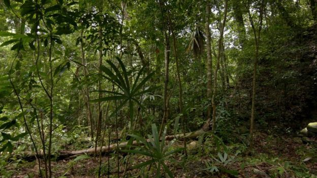 Los arqueólogos excavaron sitios mayas cubiertos por la vegetación de la jungla. Foto: Wild Blue Media/Channel 4/National Geographic