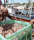 El comercio exterior de camarón fue afectado con la medida.
