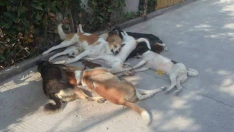 Varios perros callejeros aparecieron en las calles de San Marcos la Laguna. (Foto Prensa Libre)