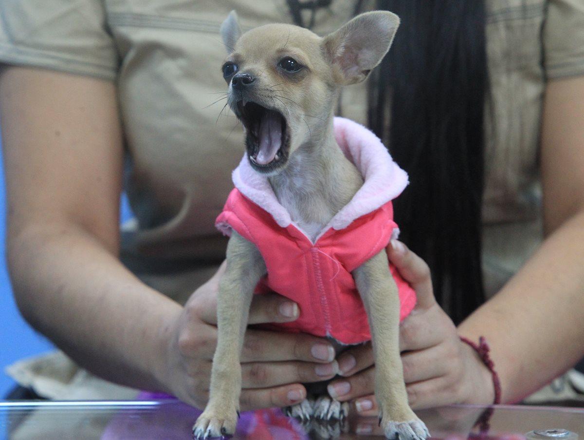 La boca de las mascotas también merece cuidados