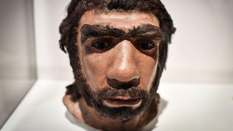 Los neandertales vivieron en Europa y el suroeste y centro de Asia.