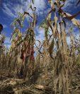 Al menos 300 mil personas son afectadas por los efectos de la canícula prolongada que afectó este año al país. (Foto Prensa Libre: Hemeroteca PL)