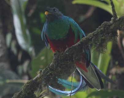 Hoy es el día del Quetzal