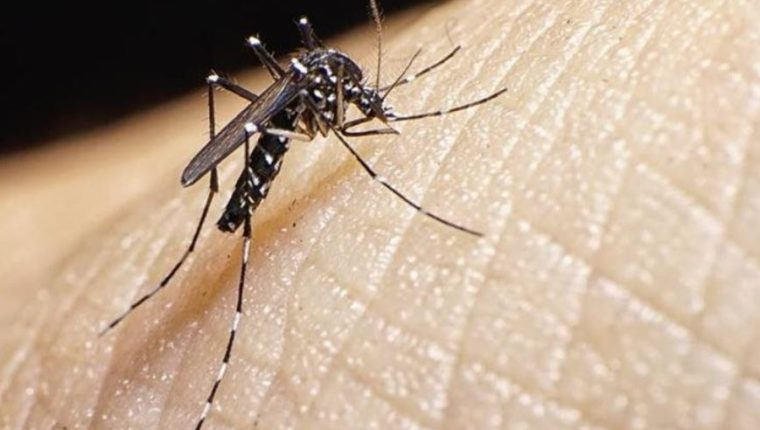 Con una sola gota de sangre del paciente se puede realizar la prueba del Zika en 10 minutos. (Foto Prensa Libre: Hemeroteca)