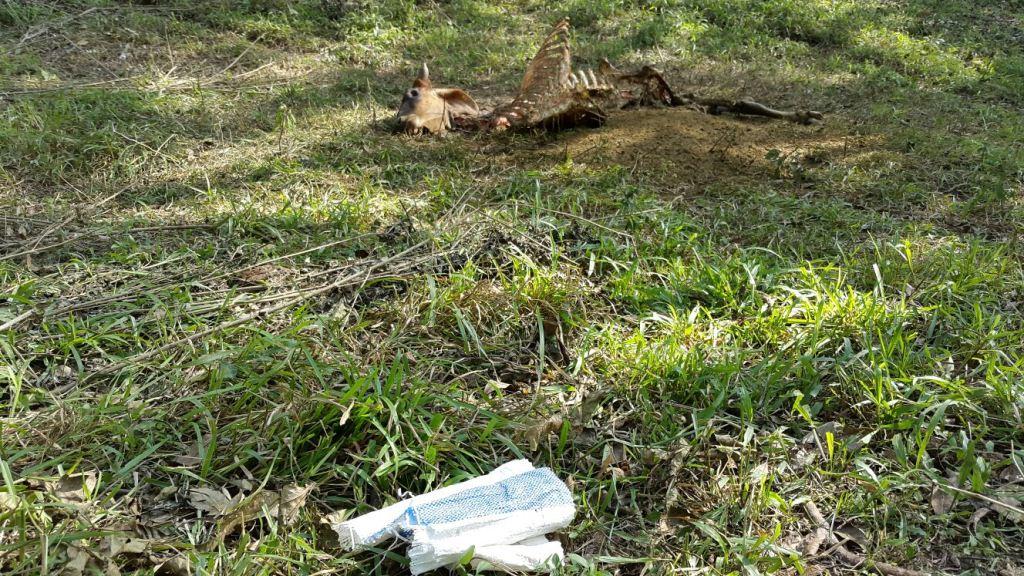 Aumenta robo de ganado en Olopa