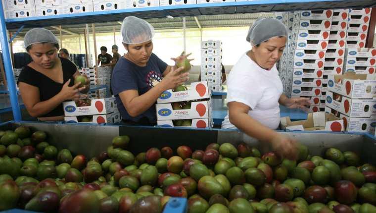 El crédito para las pequeñas y medianas empresas se mantiene en terreno negativo a pesar que existe liquidez en el sistema financiero, pero no hay demanda. (Foto Prensa Libre: Hemeroteca)