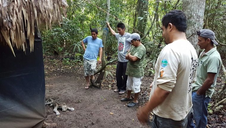 Guardarrecursos observan al animal muerto en Petén. (Foto Prensa Libre: Rigoberto Escobar)