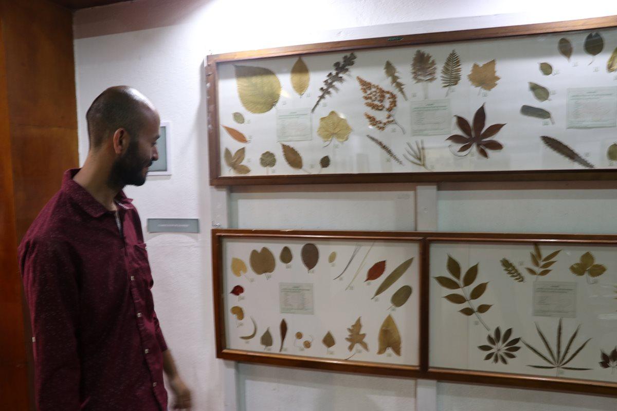 Estas son algunas de las muestras que se pueden observar del científico guatemalteco en el Museo de Xela. (Foto Prensa Libre: María José Longo)