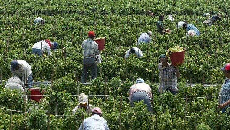 La economía de los Estados Unidos esta pasando por un buen momento que está demandando mayor mano de obra de personas de origen latino en varios sectores productivos. (Foto Prensa Libre: Hemeroteca)