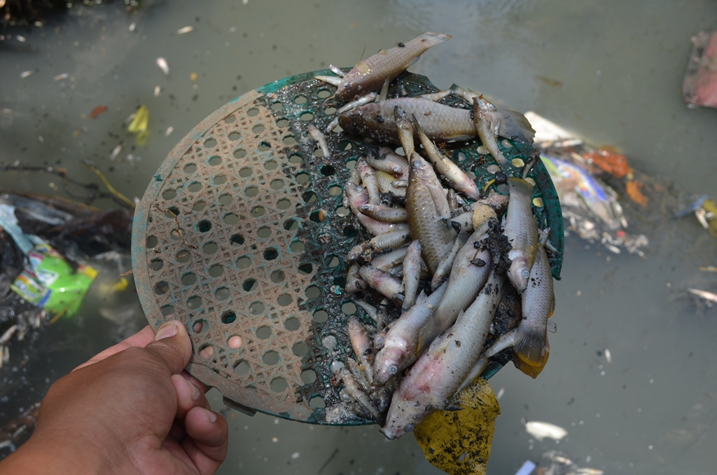 Reportan mortandad de peces en el río Bolas