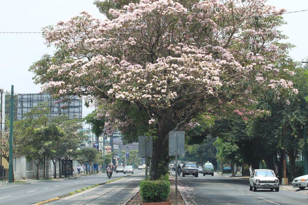 Calendario Autodromo Pedro Cofino 2019.Las Flores Del Verano En Guatemala Prensa Libre