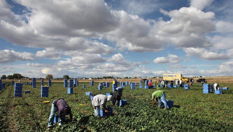 La mejora del empleo en los Estados Unidos esta demandando mayor mano de obra, según el Banguat. (Foto Prensa Libre: Hemeroteca)