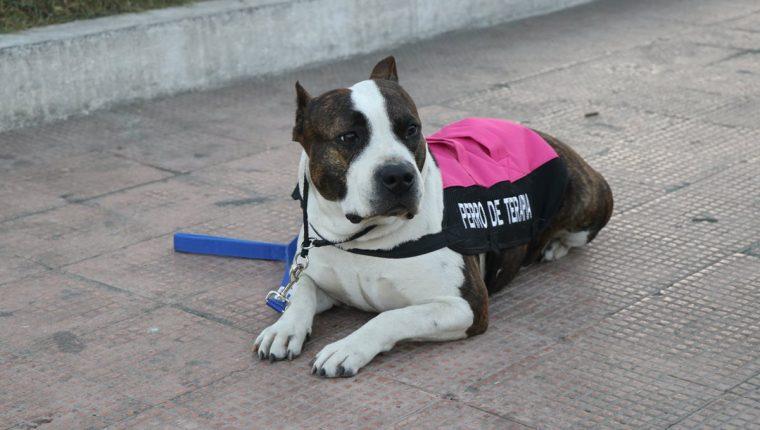 """""""Tigresa"""" ayuda a otras personas que buscan rehabilitación. (Foto Prensa Libre: María José Longo)"""