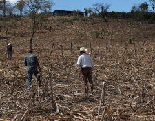 La canícula será de 10 días, pero afectará directamente a las comunidades del corredor seco. (Foto Prensa Libre: Hemeroteca PL)